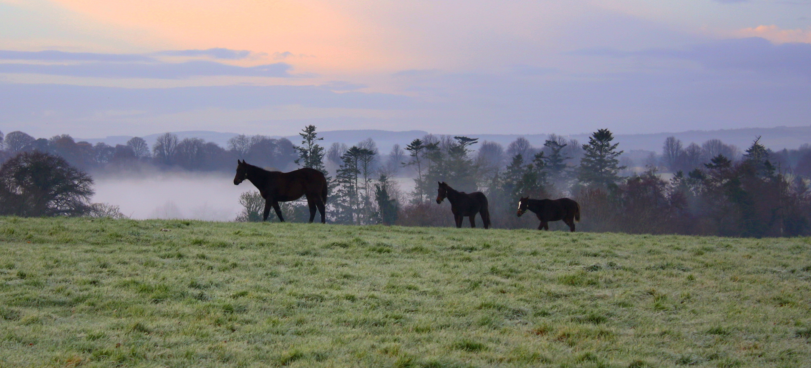 Horses at Mount Juliet image