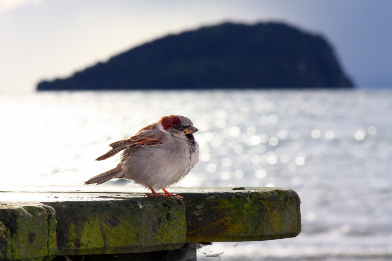 Lake Taupo Bird - second photo