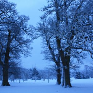 Why Snow appears Blue in Photographs…