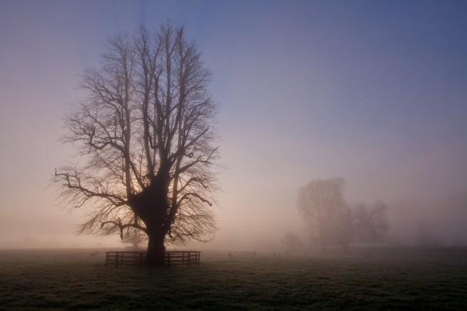 November Fog - Fog in Kilkenny
