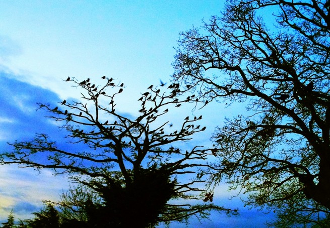 Birds - Early Morning Birds photos