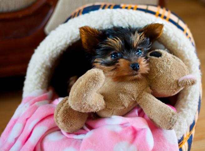 Puppy, Pet Photography, Pet, Photography, Pets, Photographing Pets
