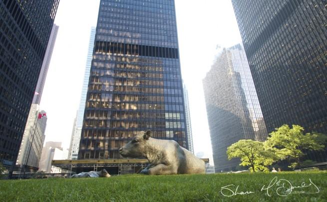 Cows in Toronto sitting sculptures - Cow Sculptures in Toronto