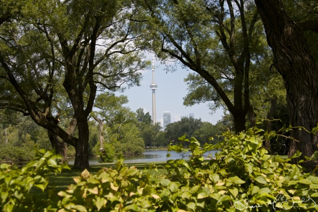 CN Tower visible for miles around in Toronto - Toronto CN Tower photo from Toronto Island.