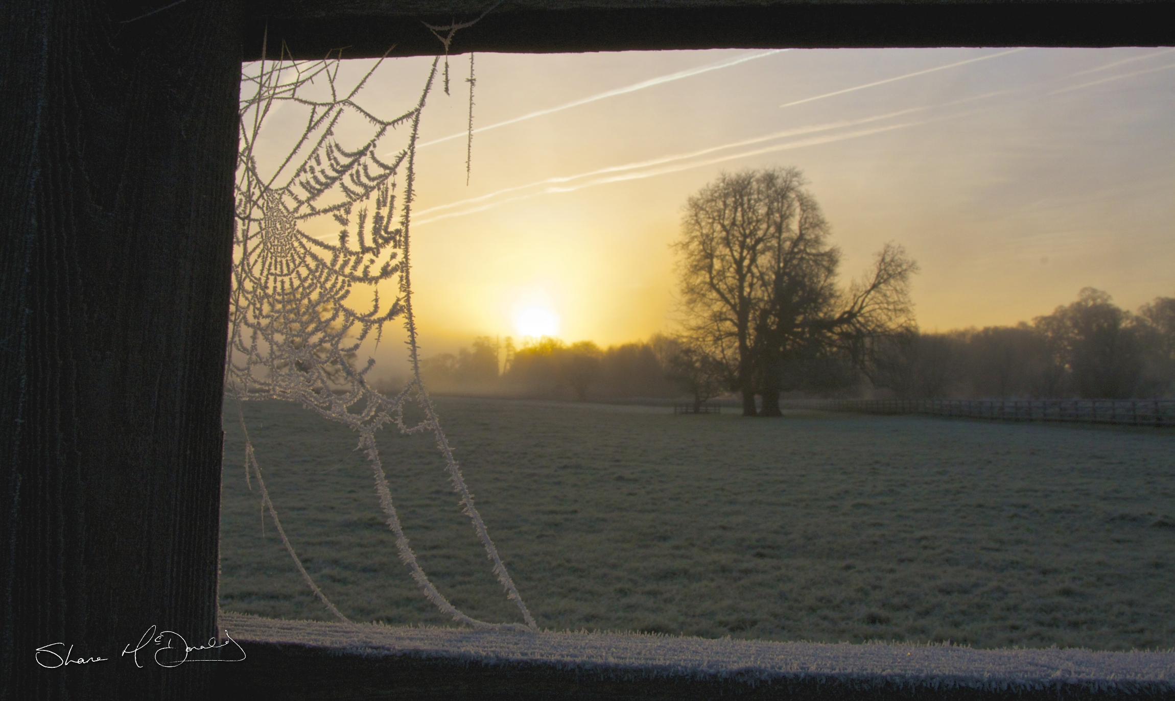 Frosty Spiders Web 4