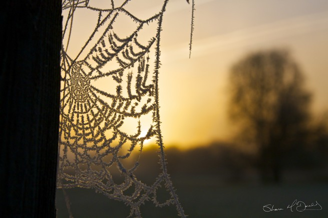 Frosty Spiders Web 3