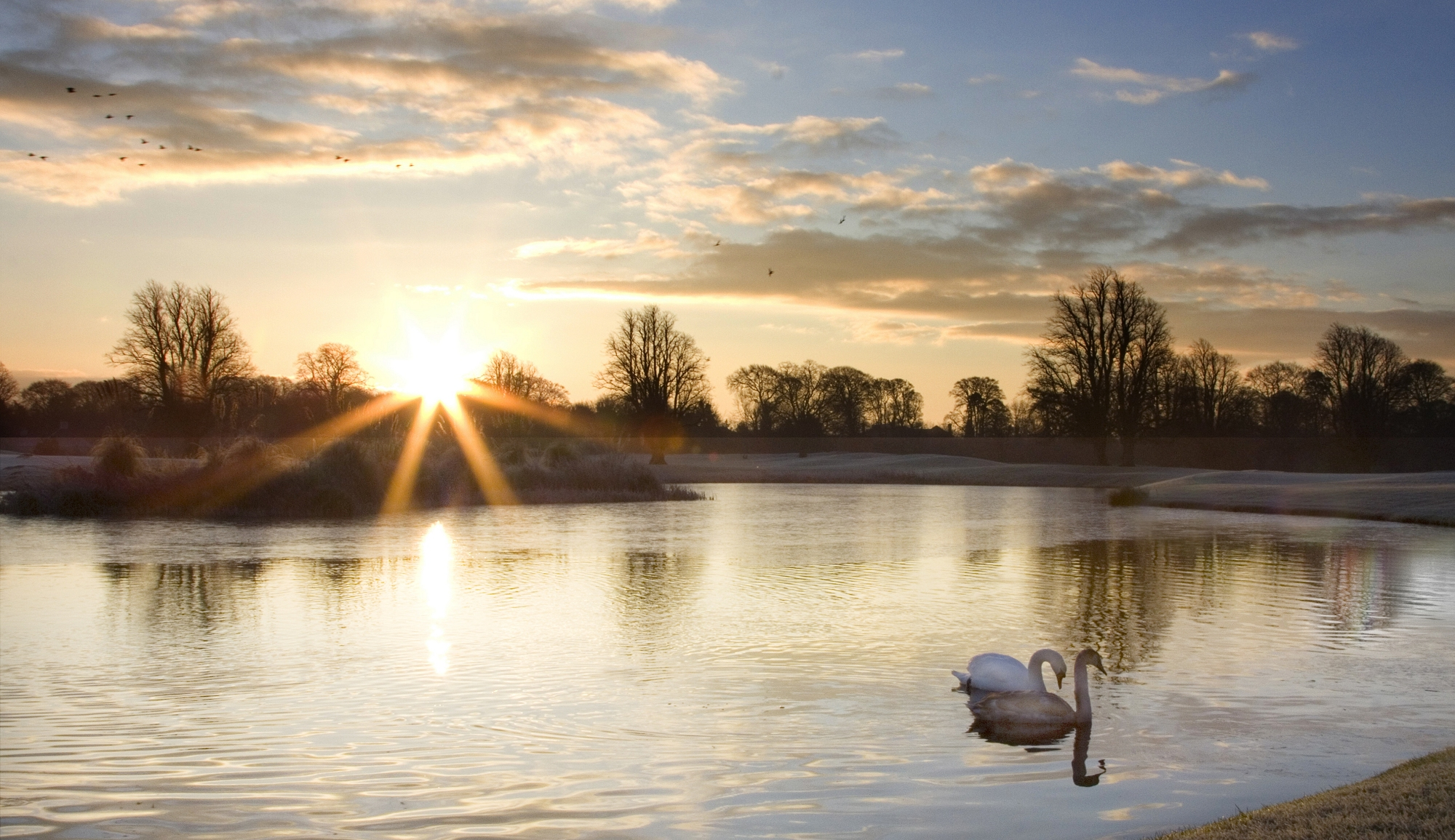 Golden Hour Photography, Morning, Swans on Lake during Golden Hour Photo