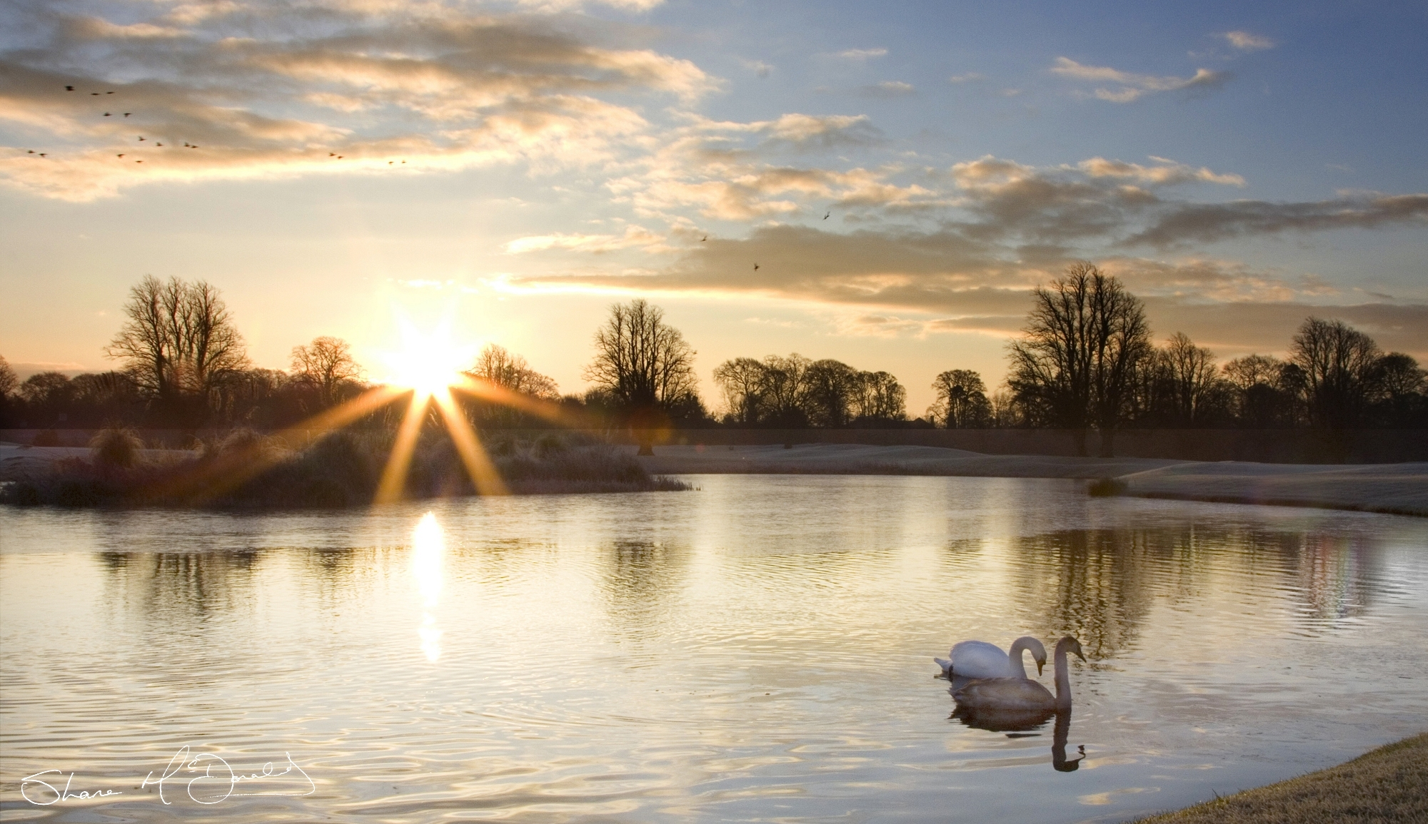 Morning Photography – Swans on the Lake