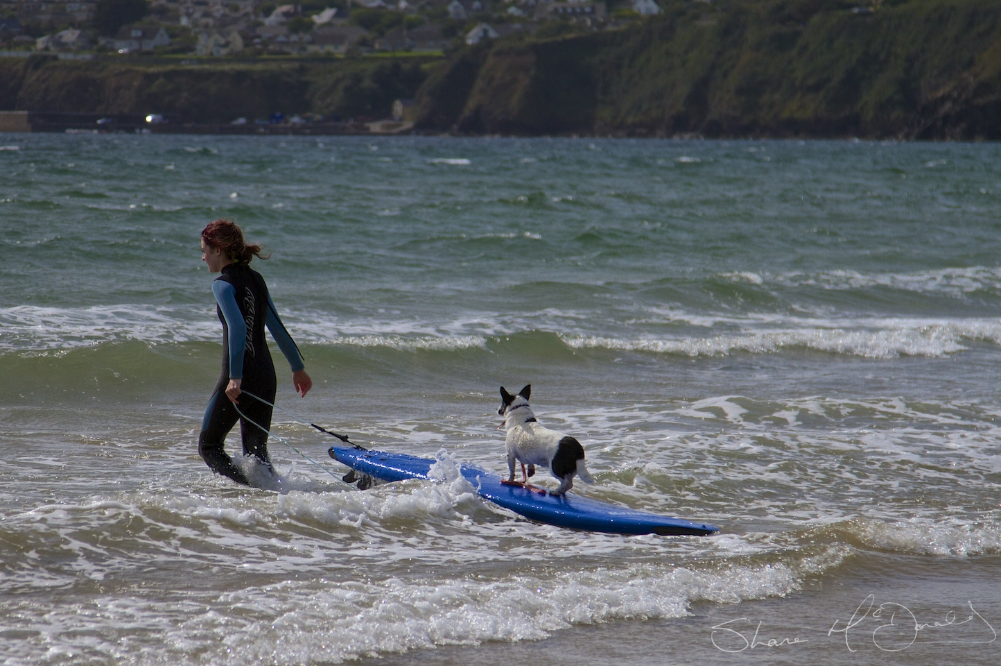 Tramore Dog Surfing – Yes, Dog Surfing!