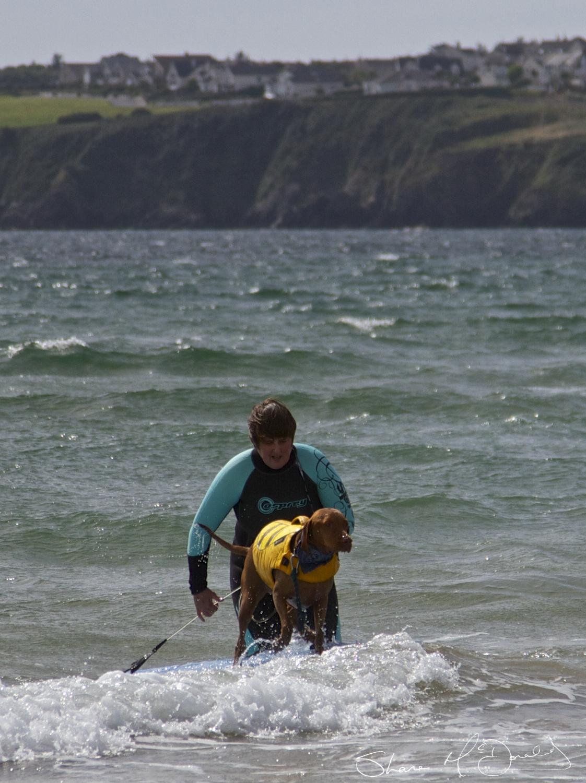 Dog Surfing Tramore