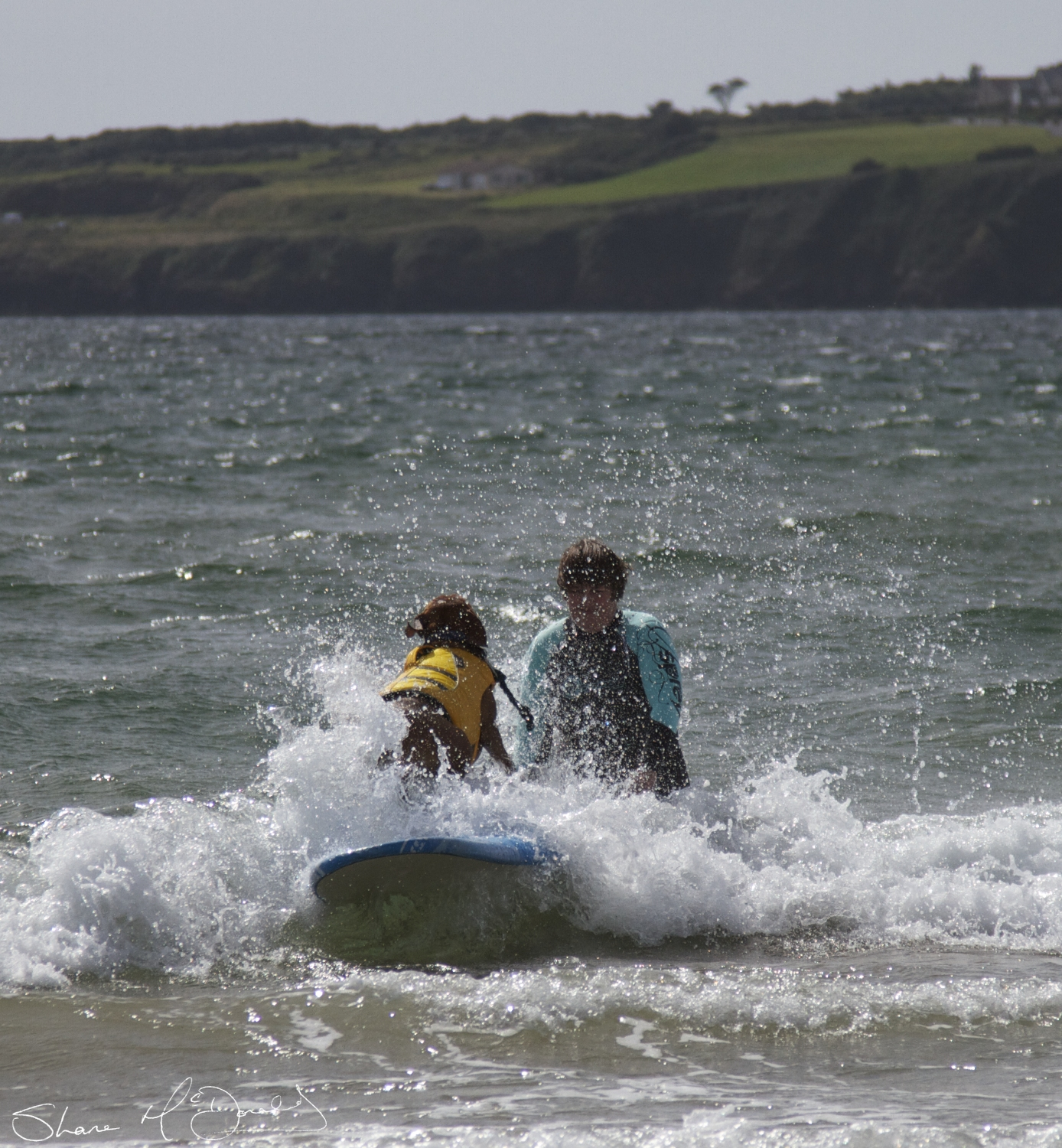 Dog Surfing Tramore