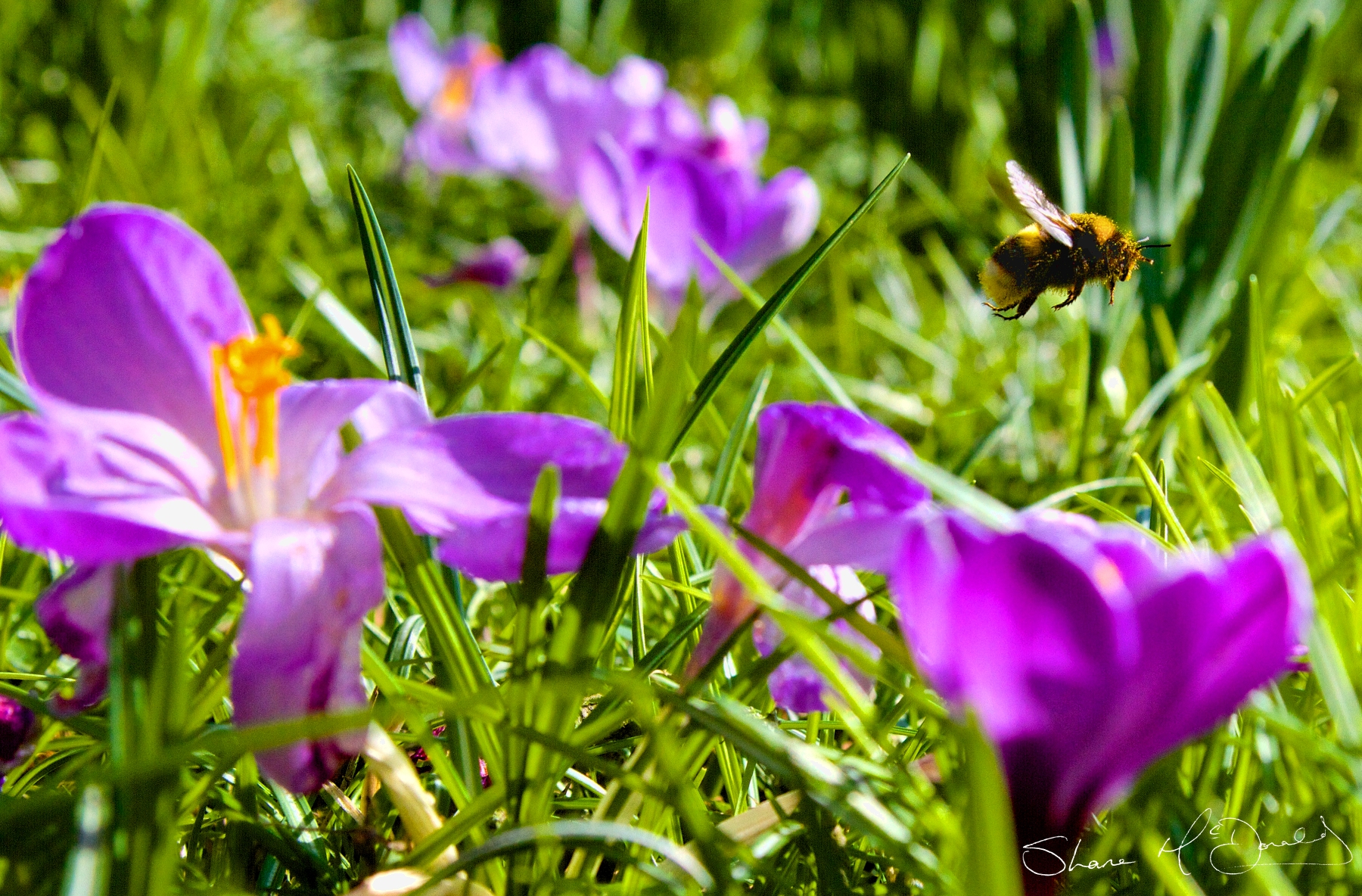 Bee Taking off flying