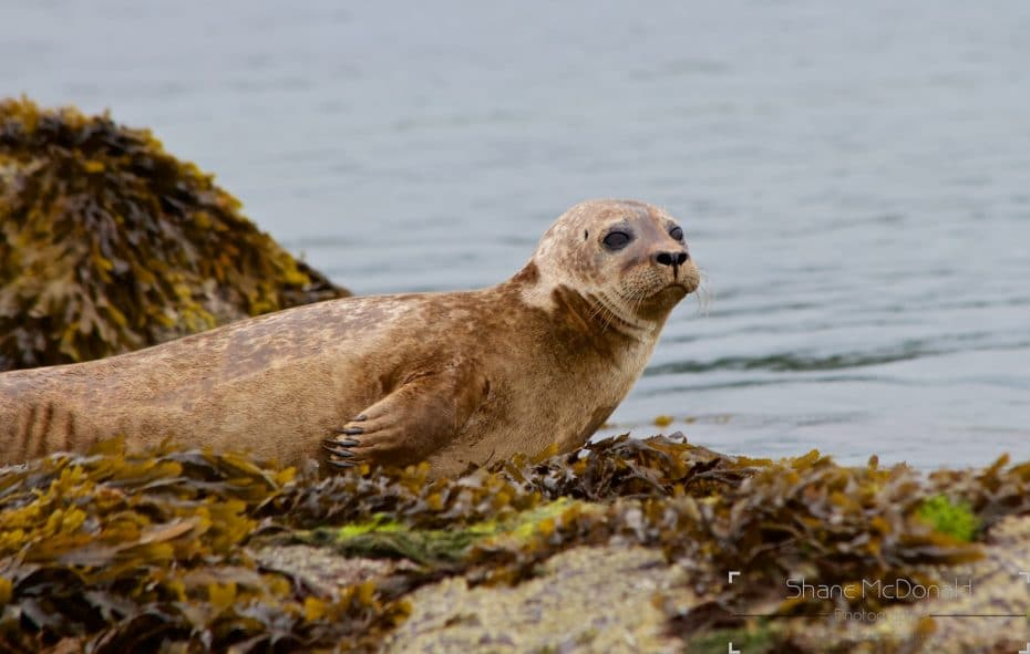 One of the Seals close-up on Seal Island