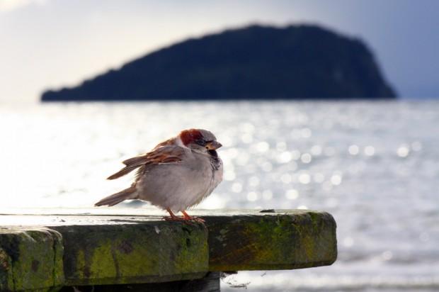 Lake Taupo Bird 2