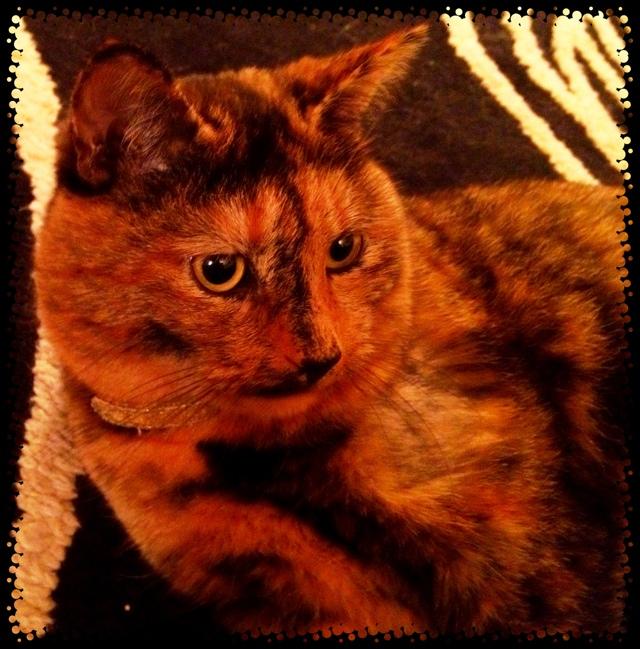 iPhone cat iPhone photo