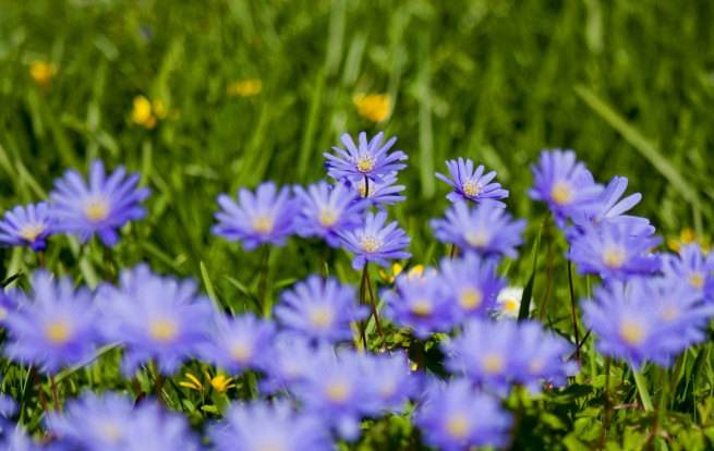 Last of the Spring Flowers, Blue, Spring, Flowers