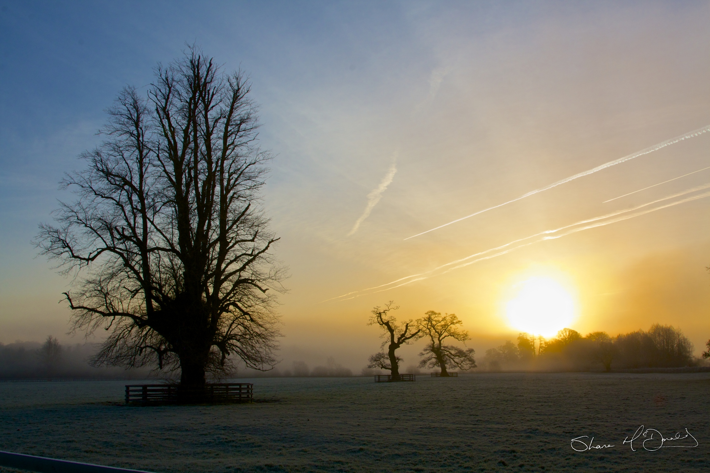 Winter Scenes and Frosty Mornings