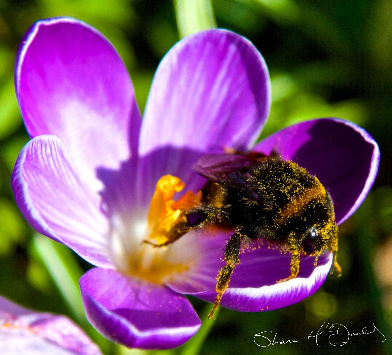 Spring Bee Photoshoot